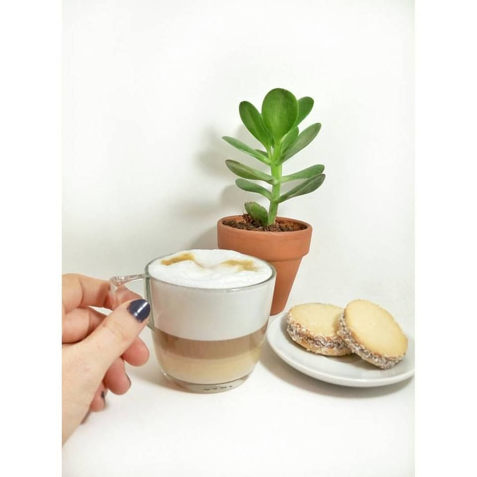 סוקולנטים אלפחורס קפה בלוג הצד שלה בלוגריות אחינעם לוי דרור שדה
