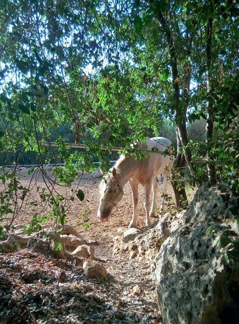 קמפינג אבירים מקום בלב המלצה דרור שדה בורנשטיין קיבוץ טירת צבי